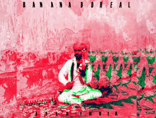 banana boreal disco